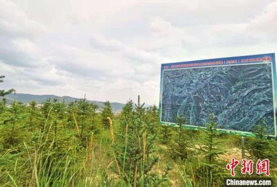 图为位于定西城区的福州·定西东西部扶贫协作水土流失综合治理(生态林)项目。 张婧 摄