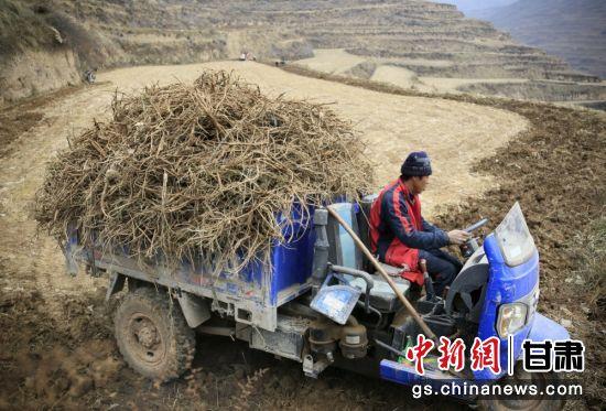 图为药材收获的季节,陇南市境内药农运输药材。(资料图)冉创昌 摄