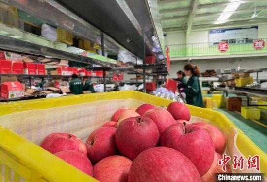 6月8日,甘肃德美地缘现代农业集团有限公司工人正在果品分选系统流水线操作。 刘玉桃 摄