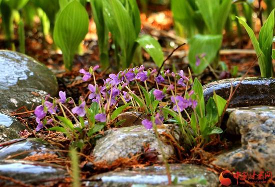 无论是破土而出的绿芽,还是含苞待放的花儿,都竞相展示自己的嫩艳。