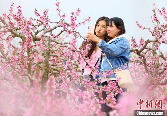 图为游客在桃园赏花。 高展 摄