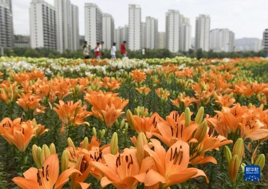 9月4日,游客在永靖县刘家峡镇黄河花堤上赏花。新华社发(史有东 摄)