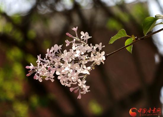 大自然的美从来不让人失望,看见它,仿佛就听见了来自春天的呼唤。