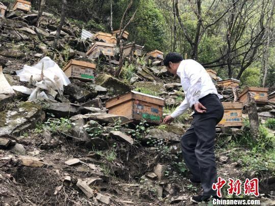 近日,在甘肃陇南市武都区深山中,养蜂人正忙着照料蜂箱。 徐雪/摄