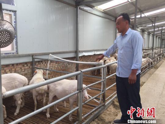 甘肃庆城县驿马镇杨湾村李小军的农民专业合作社带动村里贫困农户以羊只和土地入股,教村民养羊技术,使村里的贫困农户稳步脱贫。图为李小军正在标准化羊舍里向羊只供应水。 侯志雄 摄