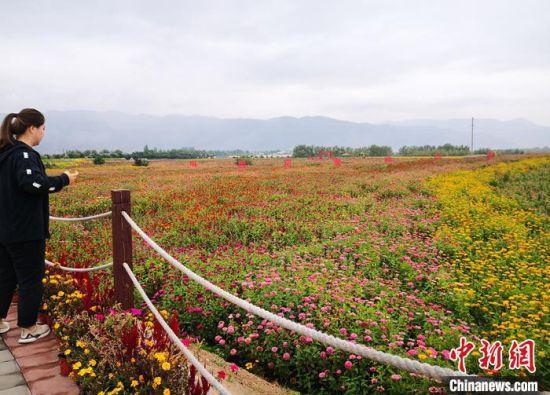 9月9日,在甘肃省白银市白银区现代农业科技示范园,游人在花海游玩。