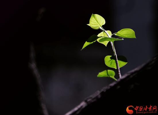 即使再渺小,也要努力地向上生长,因为阳光照耀着每一寸土地和每一个你我。