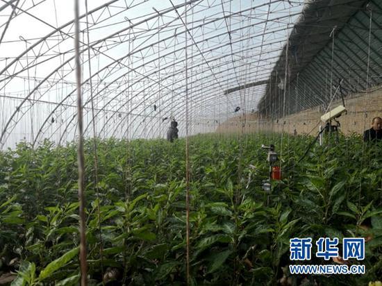 玉门市设施农业大棚。