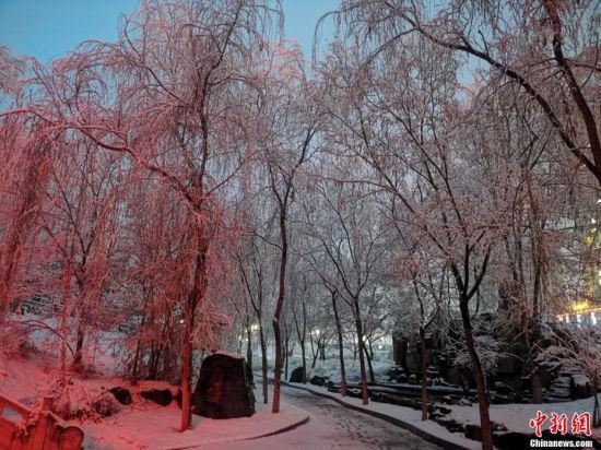 图为雪落在树木上。 张宏 摄