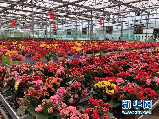 临夏县百益花卉基地