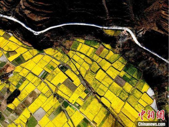 """连日来,位于甘肃陇南市文县丹堡镇的油菜花相继开放。图为航拍""""油菜花海""""。 李亚龙 摄"""