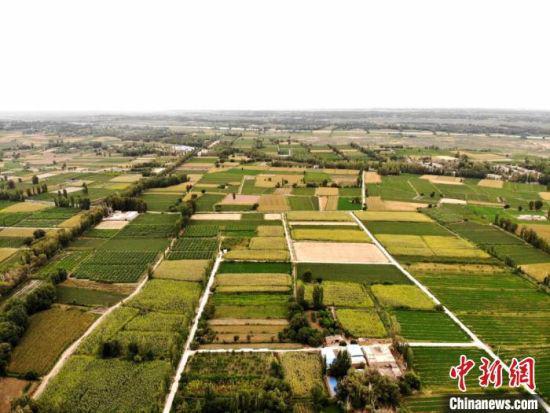 李广桃又叫紫胭桃,紫红中含绿,呈胭脂色。图为戈壁里绿意四溢的田地。