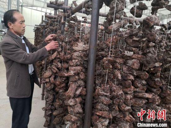 9月1日,57岁的甘肃陇南市宕昌县哈达铺镇村民药农赵明忠正在晾晒中药材。
