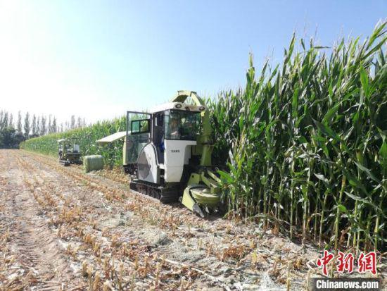 图为由甘肃省机械科学研究院有限公司研发的饲草收获装备在田间作业。(资料图)