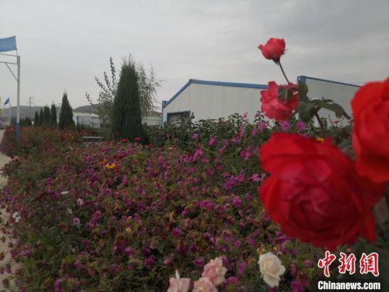 图为循环产业园内被鲜花包围的羊舍。