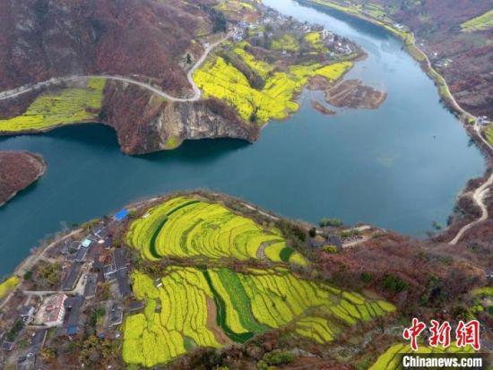 图为甘肃陇南市文县的斜坡陡地上,油菜花盛开点缀山体。(资料图) 冉创昌 摄