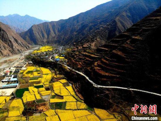图为甘肃省陇南市初春山谷中盛开的油菜花。(资料图) 李亚龙 摄