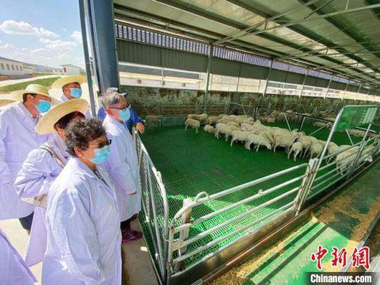 华媒代表们参观庆环肉羊制种基地。 高展 摄