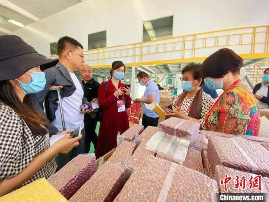 华媒代表了解当地小杂粮发展情况。 高展 摄