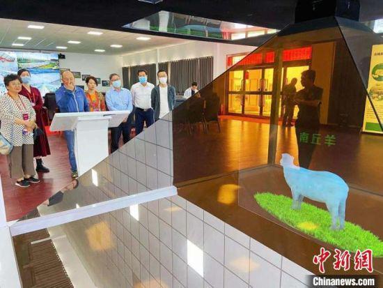 华媒代表们了解当地羊产业发展情况。 高展 摄