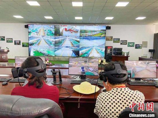 6月7日下午,华媒代表们通过AR技术参观庆环肉羊制种基地。 高展 摄