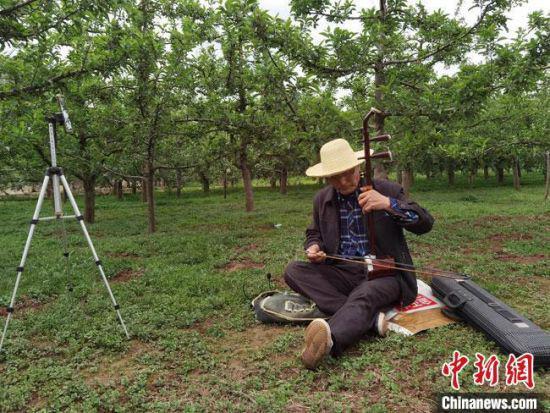5月中旬,甘肃陇南市礼县六旬老人张加成在果园里直播完苹果树修枝后,又抱起随身携带的二胡与网友互动。 冯志军 摄