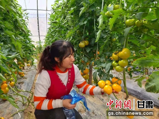 图为西固区张家台村大棚蔬菜。