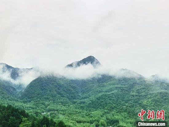 麦积山石窟周边云雾缭绕。 张婧 摄