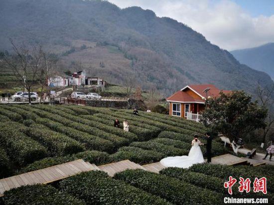 2019年3月,甘肃陇南市文县马家山的茶树绿了,成为当地一景。(资料图) 殷春永 摄