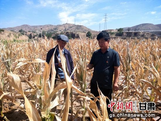 环县洪德镇赵洼村晒干的玉米。李文 摄
