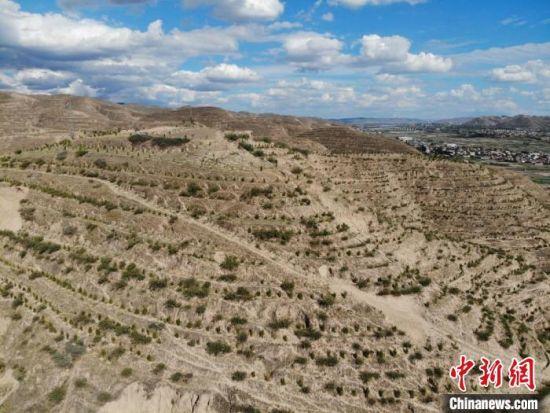 """图为昔日光秃秃的护屲山山体已栽植了沙枣树、侧柏、山杏等,宛如被""""绿丝带""""缠绕。 杨艳敏 摄"""