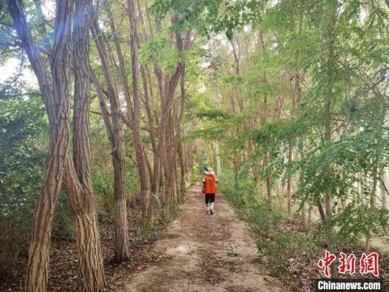 图为金昌市区环城防护林的护林员巡查树木。 史静静 摄