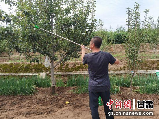 图为彭家坪镇石板山村村民王在霖在自家果园忙碌。姚智超 摄