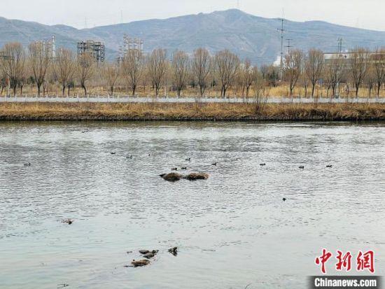 图为黄河支流的湟水河。(资料图) 孙睿 摄