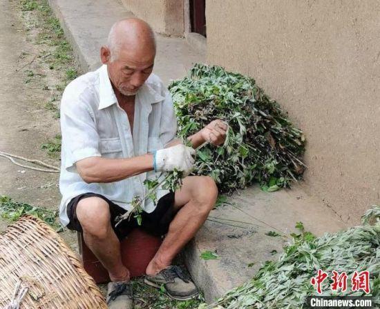图为当地村民正在整理艾叶。(资料图) 杨凤 摄