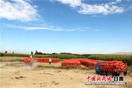 一位群众驾驶自己的农用三轮车前往交售点交售洋葱。