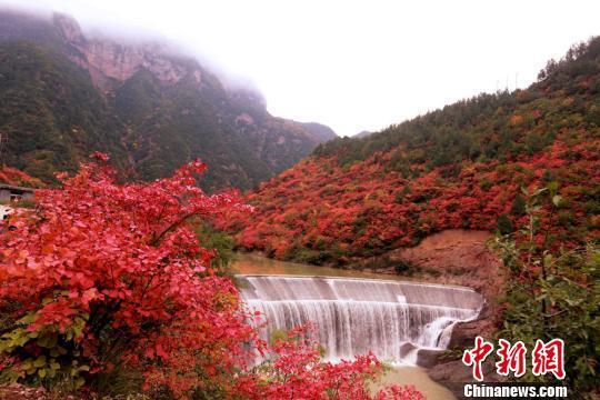 图为潺潺流水和山上的红叶。 张怀林 摄