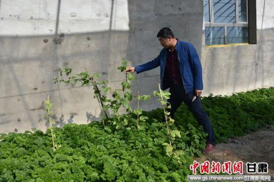 图为从台湾移栽的百香果。