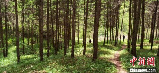 图为位于庄浪县郑河乡庙儿岔1990年栽植的人工林,如今树木参天,绿树成荫。 焦占仓 摄