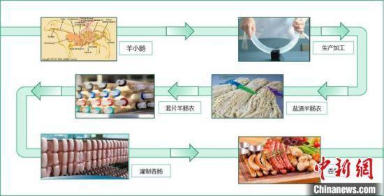 图为肠衣生产加工过程示意图。 受访者供图