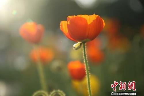 图为盛开的花朵。 陈兴明 摄
