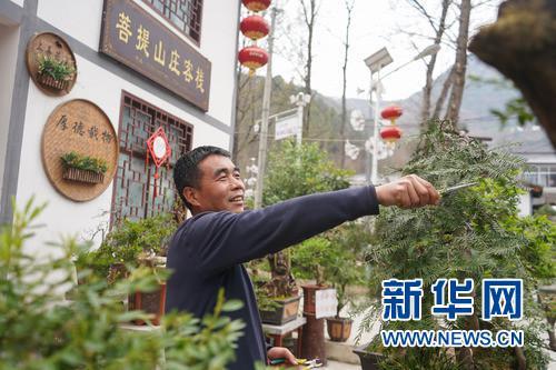 3月24日,农家客栈的老板蒲袁清修剪盆栽为景区增添景致。 新华社发(郎兵兵 摄)