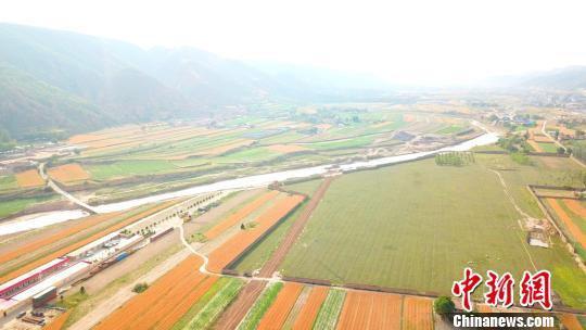 """盛夏时节,甘肃庆阳市环县30万亩小麦成熟,金黄色的小麦连成一片,给黄土高坡铺上了金色的""""地毯""""。 李文 摄"""
