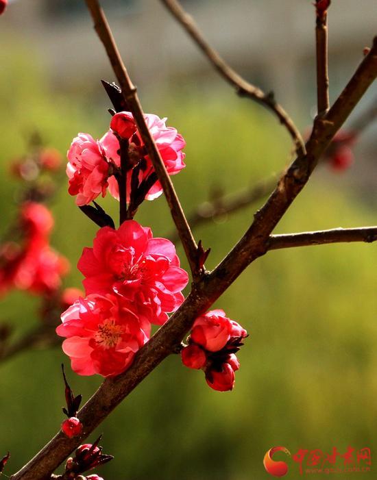 娇艳的花忙着盛开,它大概是想为校园的美景多添一份诗情画意。