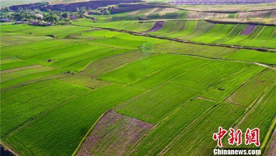 """图为田园编织的""""绿色地毯""""。 王将 摄"""