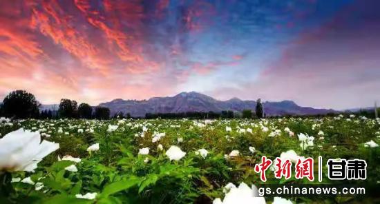 六七月正值红古区花期,漫山遍野的鲜花在晚霞下格外动人。红古区文旅局供图