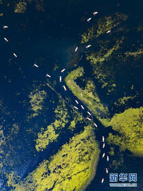 4月30日,游人乘坐游船欣赏白洋淀的美景(无人机拍摄)。新华社记者 沈伯韩摄