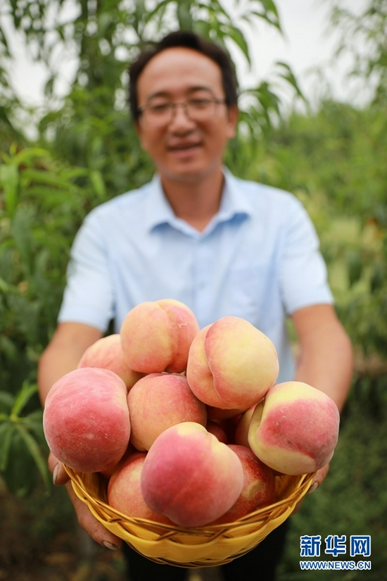 8月18日,方志利展示刚采摘的桃子。新华社记者 杜哲宇 摄