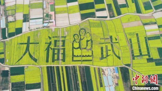 图为天水武山万亩乡村油菜花海 。(资料图) 何海瑞 摄
