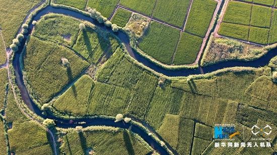 这是近日航拍的甘肃省张掖市甘州区乌江镇元丰村新河灌区。新华网发(杨永伟 摄)